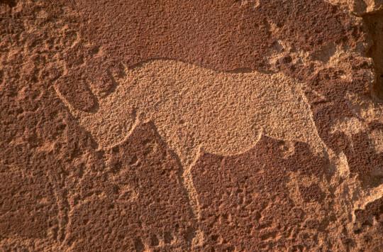 Rhinos In Rock Art